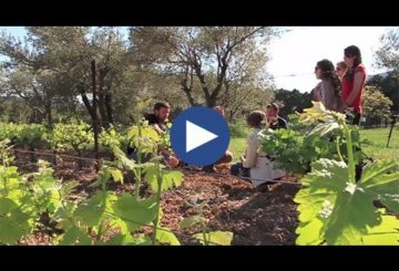 Montpellier Wine Tours