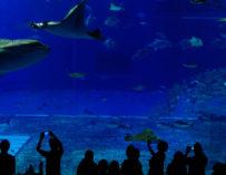 Besuch des Aquariums Mare Nostrum in Montpellier
