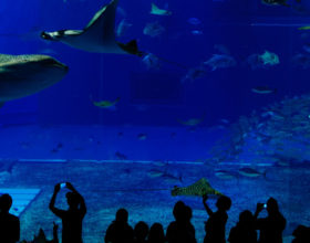 "Visit to the ""Mare Nostrum Aquarium"" in Montpellier"