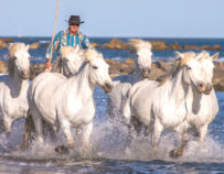 Excursion en Camargue